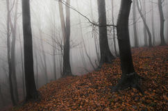 Mysterious forest in Halloween Stock Photography