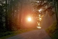 Mysterious Forest Light Stock Photography