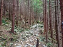 Mysterious forest in the mountains stock photography