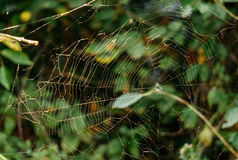 Mysterious forest. Network spider web fairy colorful forest Stock Photography