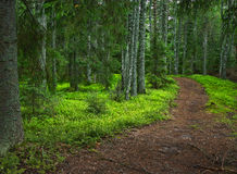 Mysterious forest path Stock Photos