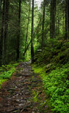 Mysterious forest path Stock Image