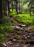 Mysterious forest path Royalty Free Stock Photo