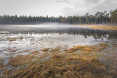 Mysterious forest pond with mist cloud and autumn colored landscape Stock Image