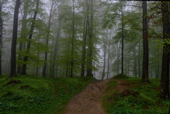 The mysterious forest royalty free stock photography