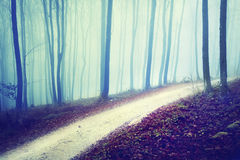 Mysterious forest road scene Royalty Free Stock Photos