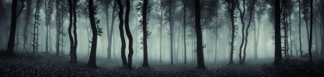 Mysterious forest scene panorama. Mysterious foggy forest panorama. Dark haunted forest with fog scene. Panorama of surreal woods with fog and mysterious light stock photo
