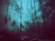 Mysterious Forest Scene Stock Image
