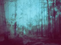Mysterious Forest Scene Royalty Free Stock Image