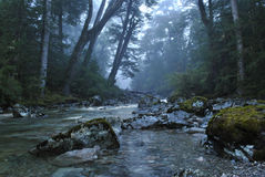 Clear stream running through mysterious, misty forest Royalty Free Stock Photos