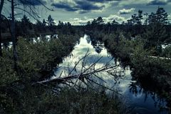 Mysterious night forest with swamp. Mysterious forest with swamp at dusk royalty free stock images