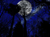Mysterious  full moon and forest Stock Image