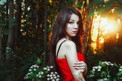 Mysterious girl in morning forest  Sunrise Royalty Free Stock Photo