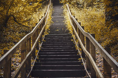 Mysterious golden staircase Stock Photography