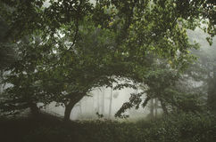 Mysterious green forest with fog Royalty Free Stock Images