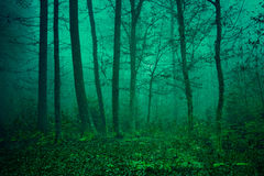 Mysterious green forest scene Stock Photo