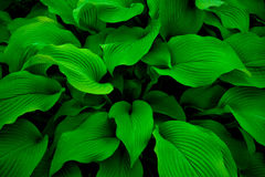 Mysterious leaves background Stock Image