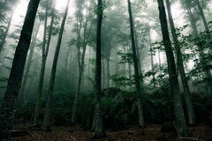 Mysterious house in the forest with fog Royalty Free Stock Photos