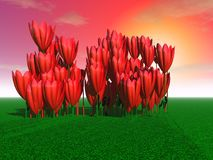 Mysterious huge tulips. 3d illustration: `Mysterious huge tulips on the field in the background of sunset Royalty Free Stock Image