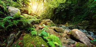 Mysterious jungle in the national park Semuc Champey Guate Stock Image