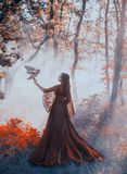Mysterious lady in gorgeous burgundy red luxurious dress and curly dark hair stands in thick foggy forest, queen of. Autumn with owl, witch vampire looking for stock photography