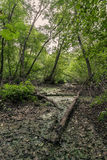 Mysterious landscape, a fallen tree in  swampy forest area. Royalty Free Stock Photography