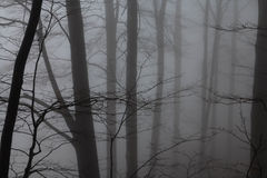 Mysterious landscape of foggy forest Stock Photo