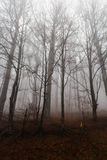 Mysterious landscape of foggy forest Royalty Free Stock Images