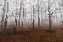 Mysterious landscape of foggy forest Stock Photography