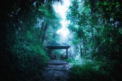 Mysterious landscape of foggy forest with path way through lush and wooden pavilion in tunnel. Surreal beauty of exotic tropical jungles. Fantasy nature and Stock Photography