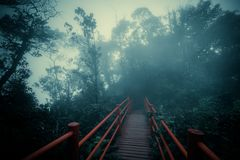 Mysterious landscape of foggy forest with wooden bridge. Runs through dense foliage. Surreal beauty of exotic trees, thicket of shrubs at deep tropical jungles Royalty Free Stock Photos