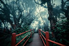Mysterious landscape of foggy forest with wooden bridge. Runs through dense foliage. Surreal beauty of exotic trees, thicket of shrubs at tropical jungles Royalty Free Stock Photo