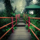 Mysterious foggy forest with wooden bridge and pavilion. Mysterious landscape of foggy forest with wooden bridge and pavilion. Surreal beauty of exotic trees Stock Photos
