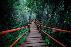 Mysterious landscape of foggy forest with wooden bridge. Runs through dense foliage. Surreal beauty of exotic trees, thicket of shrubs at tropical jungles Royalty Free Stock Photography
