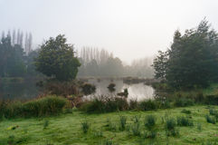 Mysterious landscape of marsh in fog Royalty Free Stock Photo