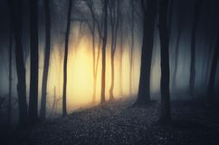 Mysterious light in dark haunted forest at night. Mysterious magical light in dark haunted forest at night on Halloween Stock Photos