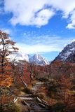 Mysterious magic forest at the Cerro Torre in Argentina royalty free stock photos