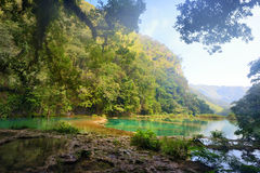 Mysterious Mayan jungle in the national park Semuc Champey Guate Royalty Free Stock Photo