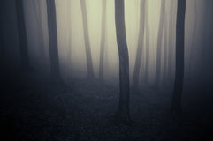 Mysterious minimal dark forest with fog Stock Photos