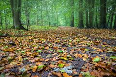Mysterious misty autumn forest with colorful leaves Royalty Free Stock Images
