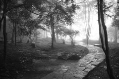 Mysterious misty path in forest in black and white stock image