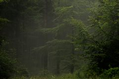 Mysterious misty wood Stock Photography