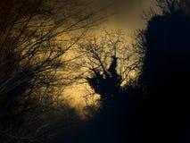 Mysterious misty woodland, evening light. Stock Image
