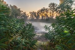 Mysterious morning time in swamp area Royalty Free Stock Image