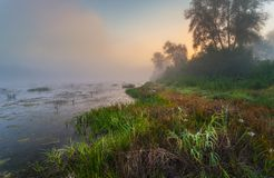 Mysterious morning time in swamp area Stock Image