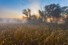Mysterious morning time in swamp area Royalty Free Stock Photo