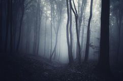 Mysterious night in forest on Halloween with fog Royalty Free Stock Image