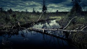 Mysterious night forest with swamp. On halloween royalty free stock image