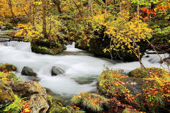 Mysterious Oirase Stream in the autumn forest Royalty Free Stock Photo