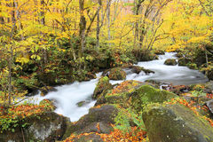 Mysterious Oirase Stream in the autumn forest Royalty Free Stock Photos